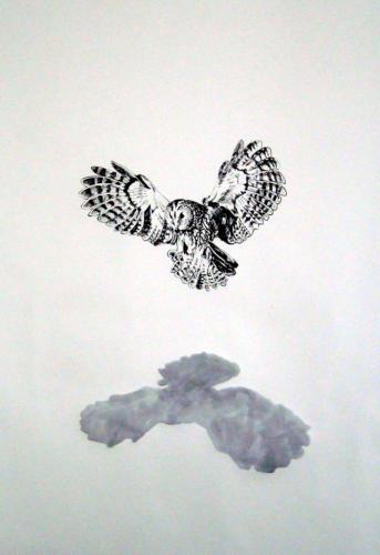 Envolé, 2011, encre sur papier, 150 x 110 cm